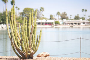 Focus on a Cactus in front of a lake with houses in distance.